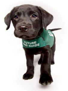 Walk for Dog Guide Fundraiser @ Hackett Park